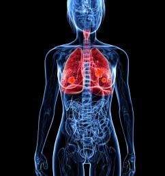 human respiratory system [ 1200 x 1600 Pixel ]
