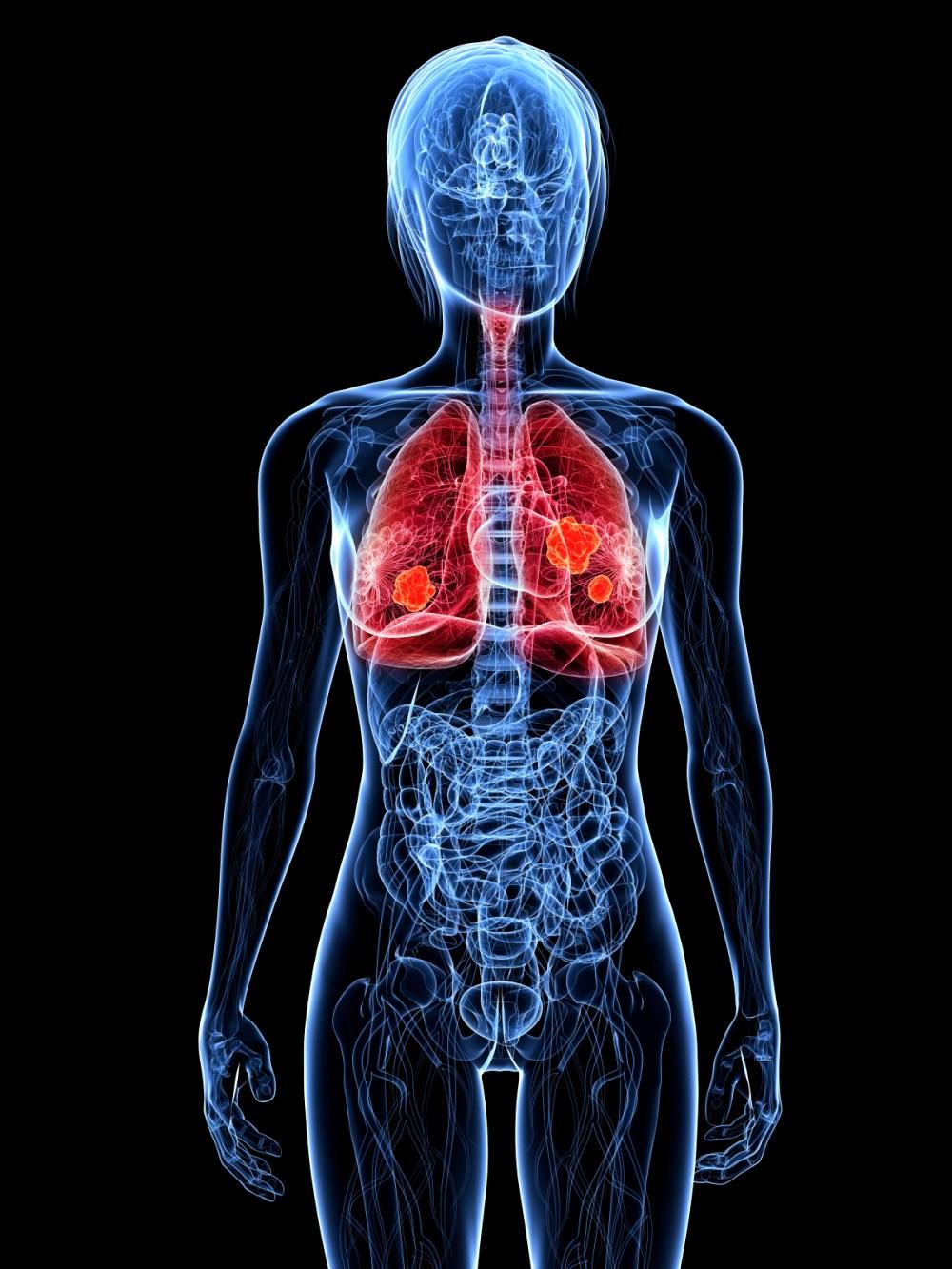 medium resolution of human respiratory system