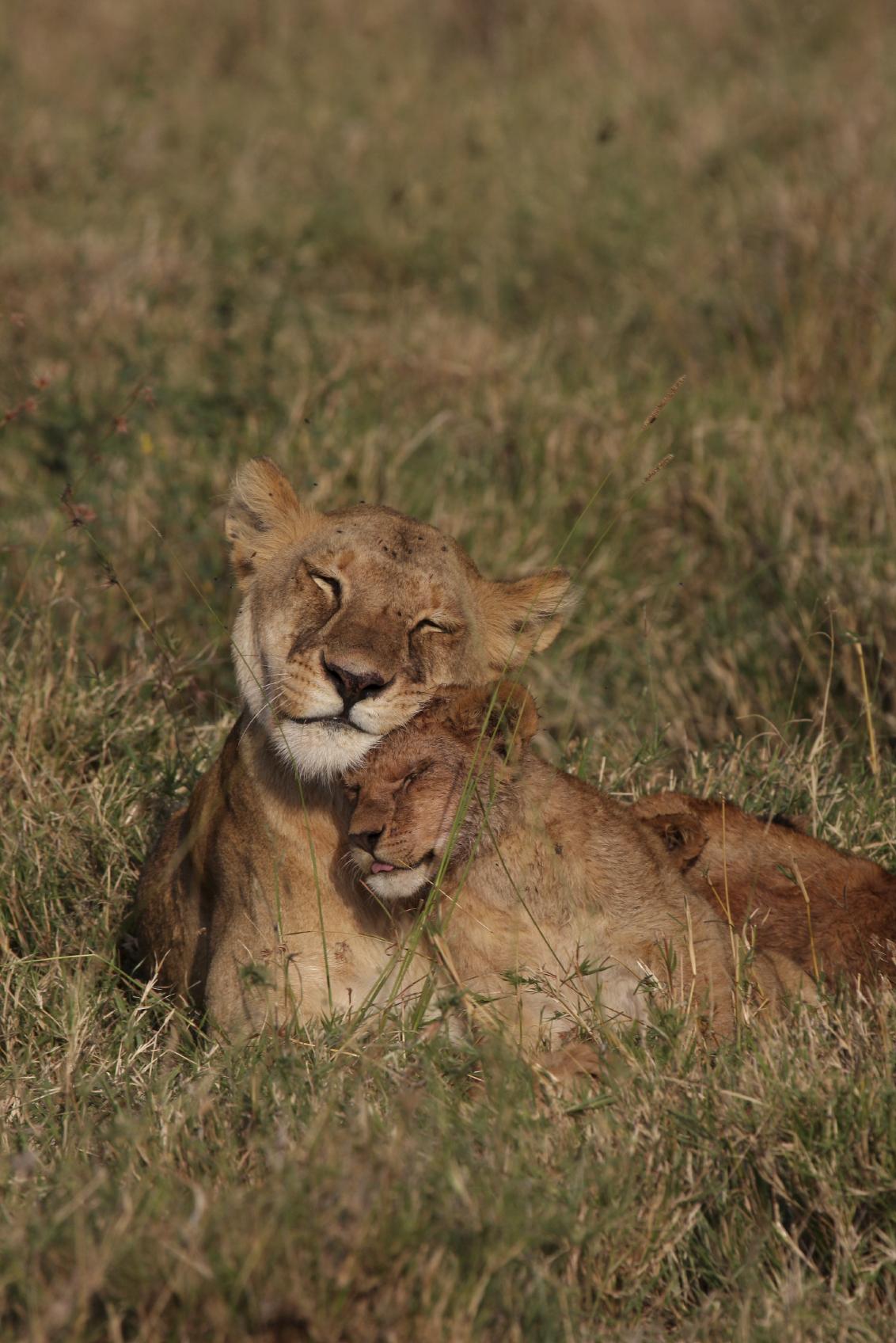 Mammals For Ks1 And Ks2