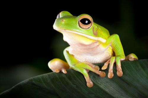 small resolution of Amphibians   TheSchoolRun