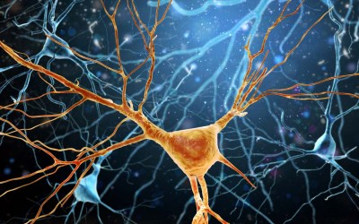 Scientists Uncover How Rare Gene Mutation Affects Brain Development and Memory