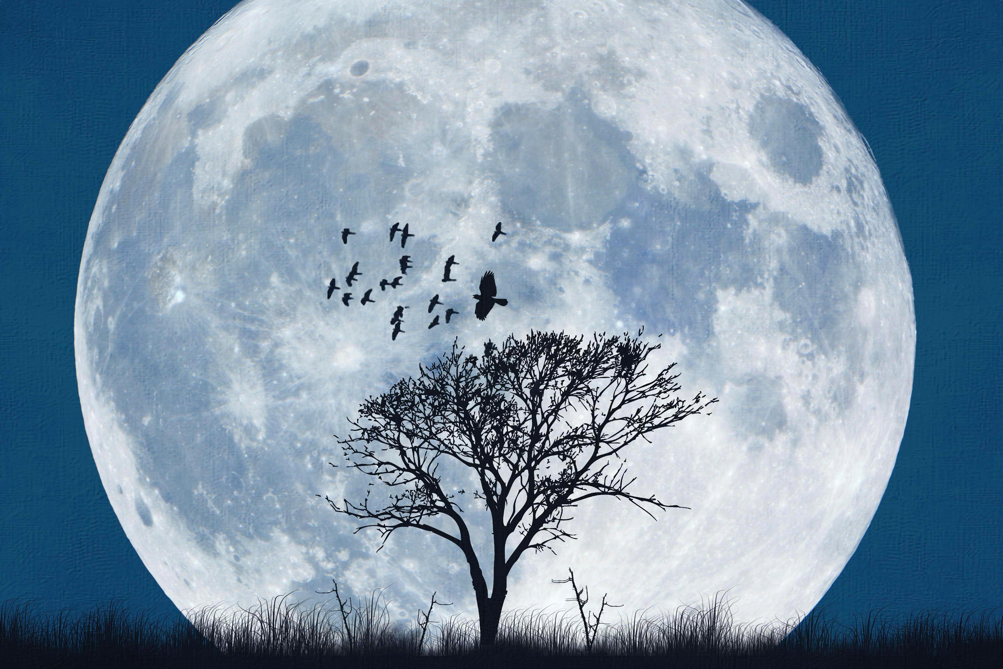 Moon dating website