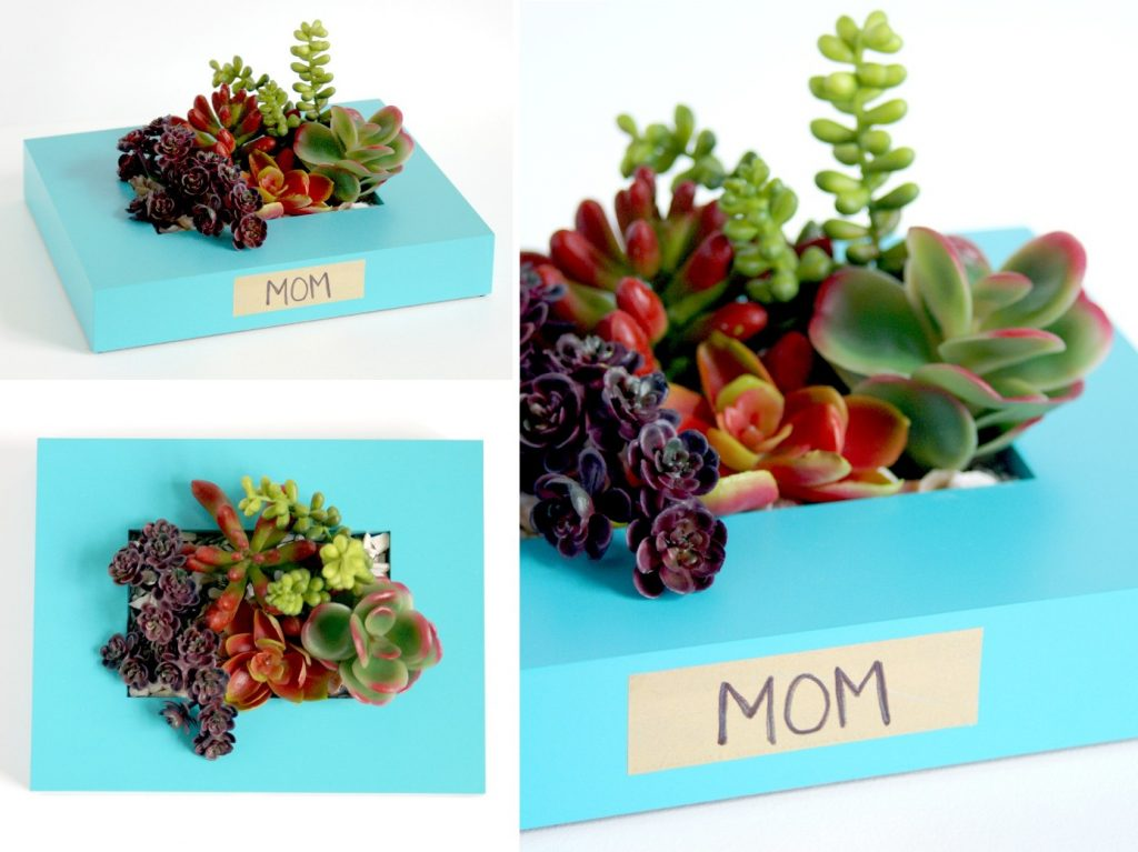 Upcycled frame succulent holder do more for less mothers day gift succulents jeuxipadfo Image collections