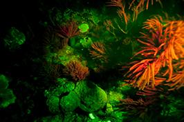 fluorescent Diving at The Scuba News