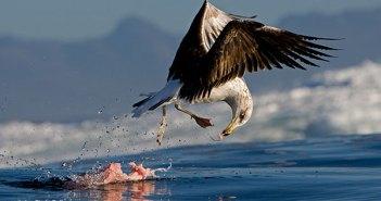 Gulls at The Scuba News