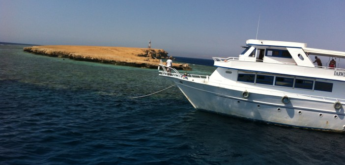Umm Gamar in the Egyptian Red Sea at The Scuba News
