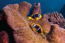 Guide to Guam at The Scuba News