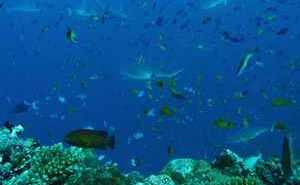 Scuba Diving Maldives at The Scuba News