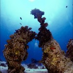 Red Sea BDE - Out into the big blue by Christopher Bartlett