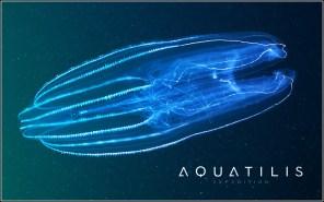 Aquatilis Expedition 14