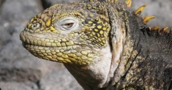 Scuba Diving Galapagos Islands at The Scuba News