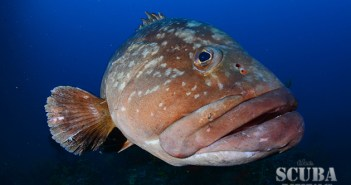 MIMA 2014 Underwater Photography Competition
