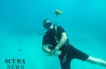 David and a fish