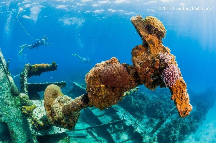 Corals growing on the historic Wreck of the Balboa in George Town harbour.