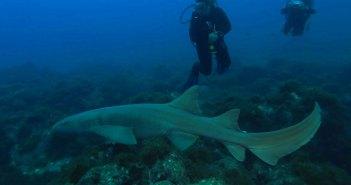 sharksanctuary3