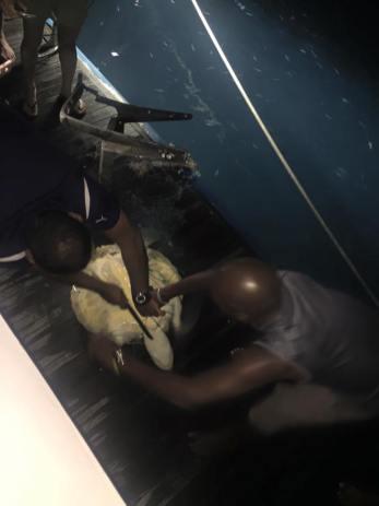 Turtle rescue on MV Leo Constellation Fleet 5