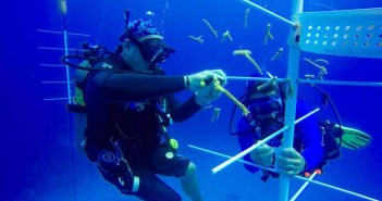"""Divers attaching coral fragments to a PVC pipe """"tree"""" in the shallow water near Divetech. It is hoped the fragments stay healthy and grow so that they can be out planted into areas of surrounding reefs that need it. Photo courtesy Divetech"""