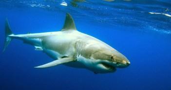 sharkaholic-amazing-adventures-1