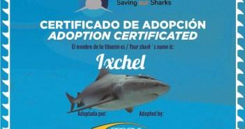 pro-dive-bull-shark-adoption-1