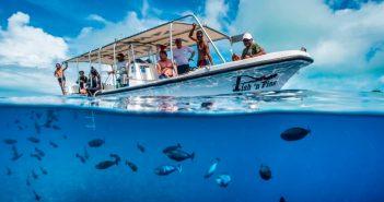 Fish-n-Fins-Palau-Large-e1497309157745