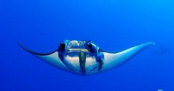 Amazing Adventures Galapagos