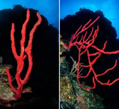 There is no better time to enjoy Cayman's wonderful world of sponges