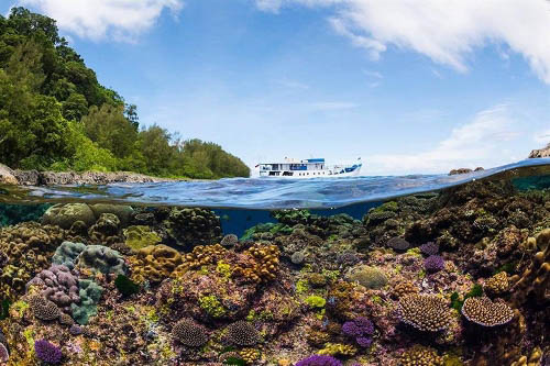 Solomon Islands with Liquid Diving Adventures