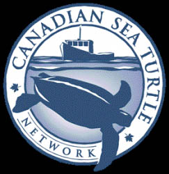 Canadian Sea Turtle