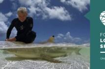 Love of Sharks 2020