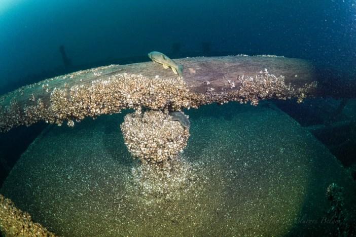 Newell Eddy Shipwreck