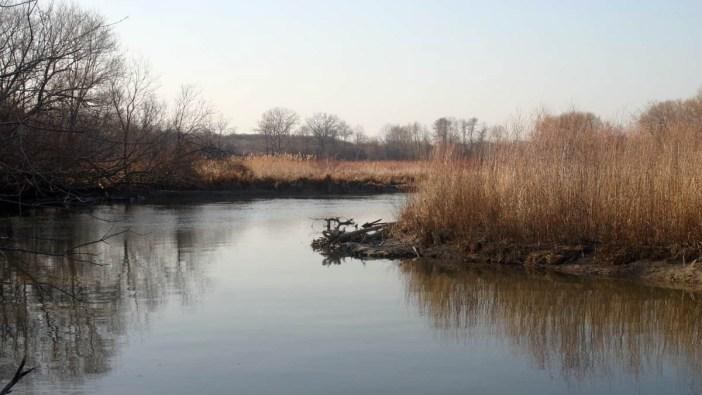 Ontario Wetlands
