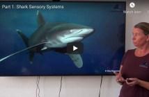 CDWS Sharks