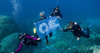 World's Largest Dive Community Joins Forces to Protect the Gre