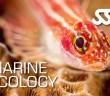 SSI Marine Ecology