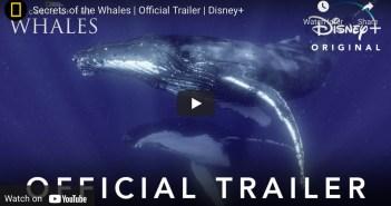 Secrets of Whales
