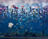 "110 PADI Mermaid Divers and Atlantis Sanya Resort Earn Guinness World Records™ Title of ""The Largest Underwater Mermaid Show"""