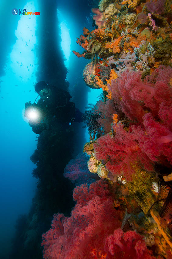 Underwater photographer between Ducomi Pier pillars overgrown with colorful sea fans and soft corals