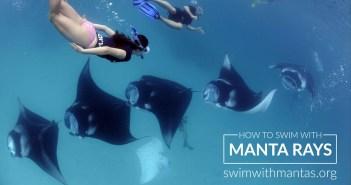 Manta Trust