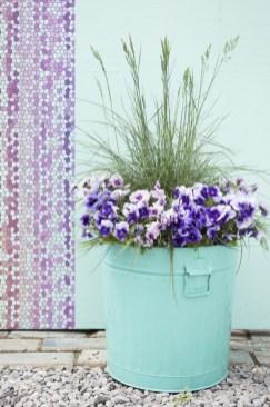 Violas will flower through to winter