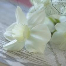 Paper white 'ZIVA'