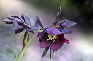 flower-4963888_640