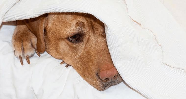 Fibrocartilagenous Embolism (FCE) - THESE DOG DAYS