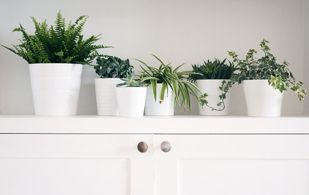 Urban Jungle Bloggers - a 'plant gang' | These Four Walls blog