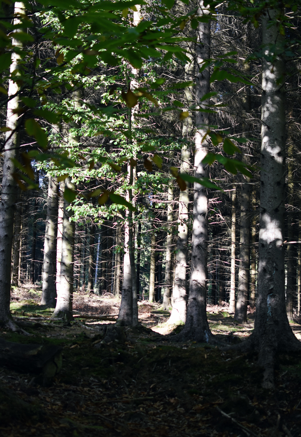 Foraging in the Forest of Dean | These Four Walls blog
