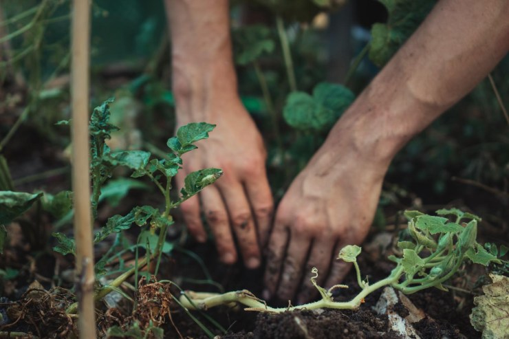 Growing vegetables and fruit   'The Edit' - tending the garden   These Four Walls blog
