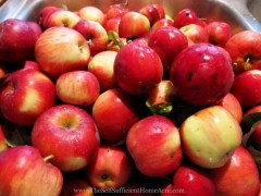 Making Applesauce from Wild Apples - The Self Sufficient HomeAcre