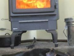 Rocky and the wood stove