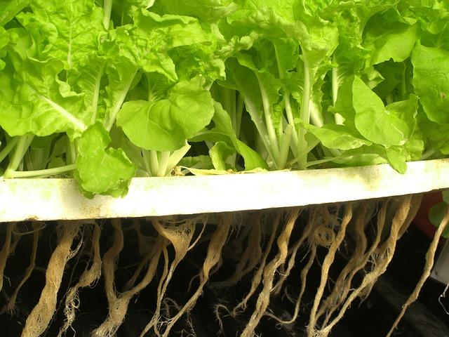 Organic Growing Using Auaponics