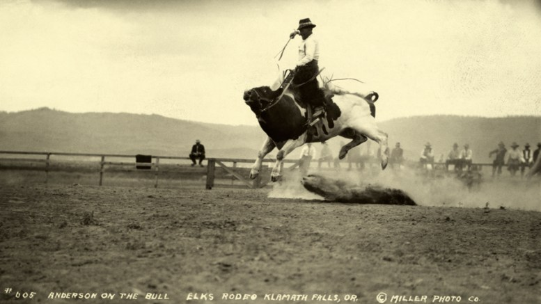 A bull riding cowboy holds tight as the bull lunges airborne, Oregon, 1916. Photograph by Miller Photo Co., National Geographic
