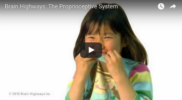 What Is The Proprioceptive System